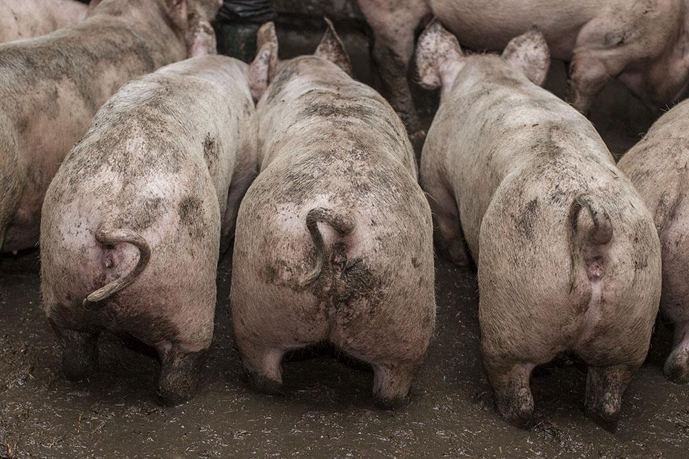 We are sorry Otway Pork